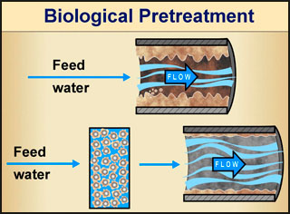 Biological Pretreatment